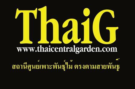 ThaiG ศูนย์เพาะพันธุ์ไม้ ไทยเซ็นทรัลการ์เด้น