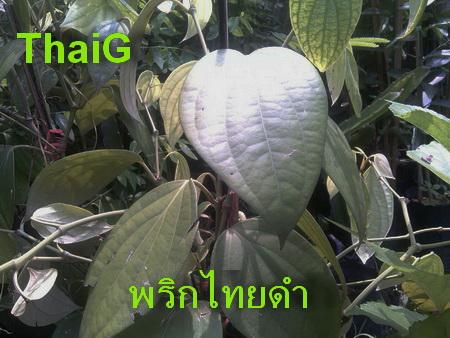 พริกไทยดำลดความอ้วน ชนิดแคปซูล แก้ท้องอืด ท้องเฟ้อ