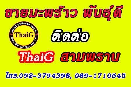 ปลูกมะพร้าว ติดต่อ ThaiG